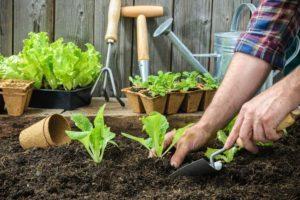 Gardening Services in Pune